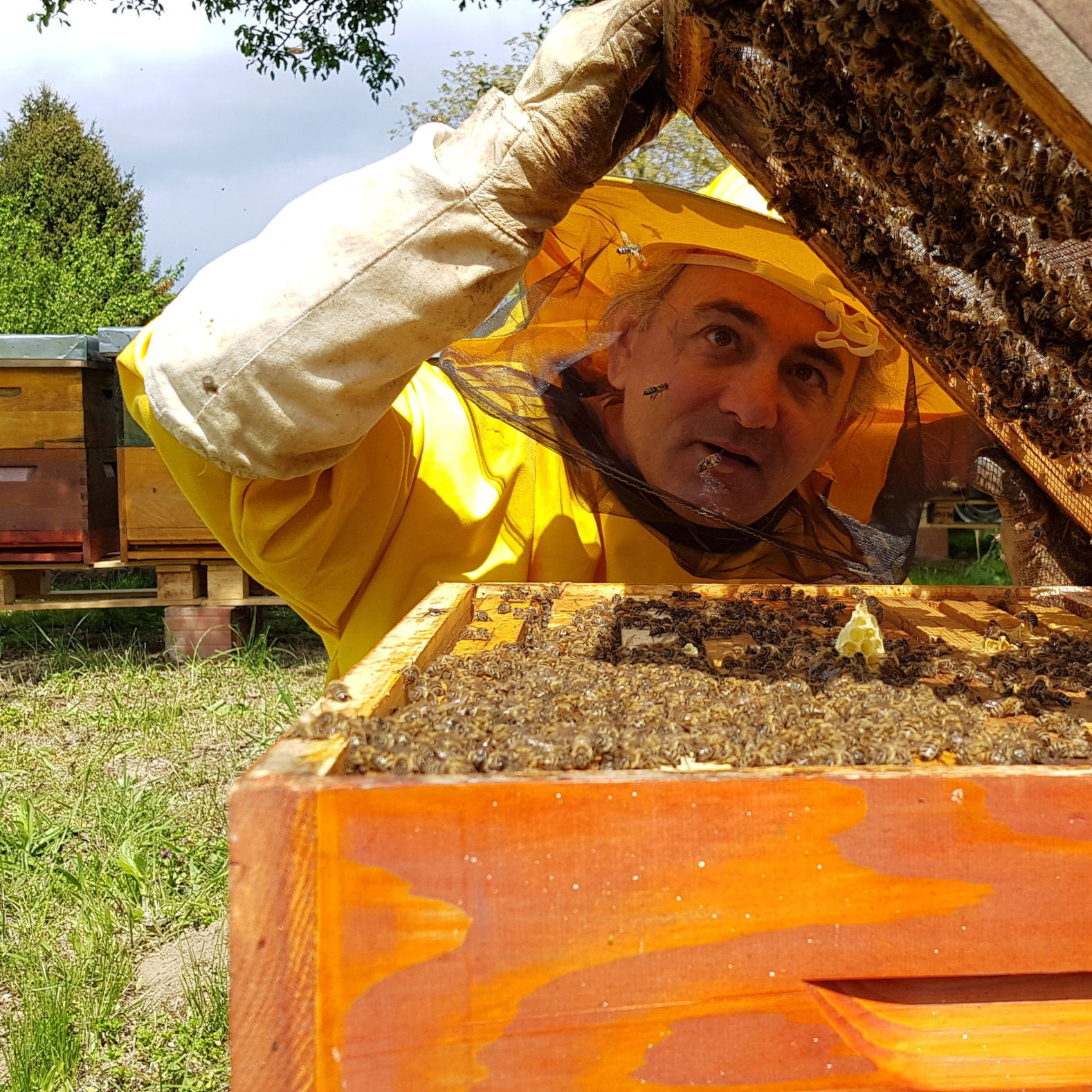 Go to Нестану ли пчеле нестаће и човек