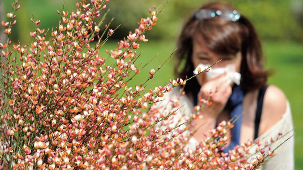 Go to Пролећне алергије: бесмислени страх од одласка у природу