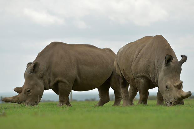 Go to Трговина дивљим животињама: уби их сиромаштво и похлепа